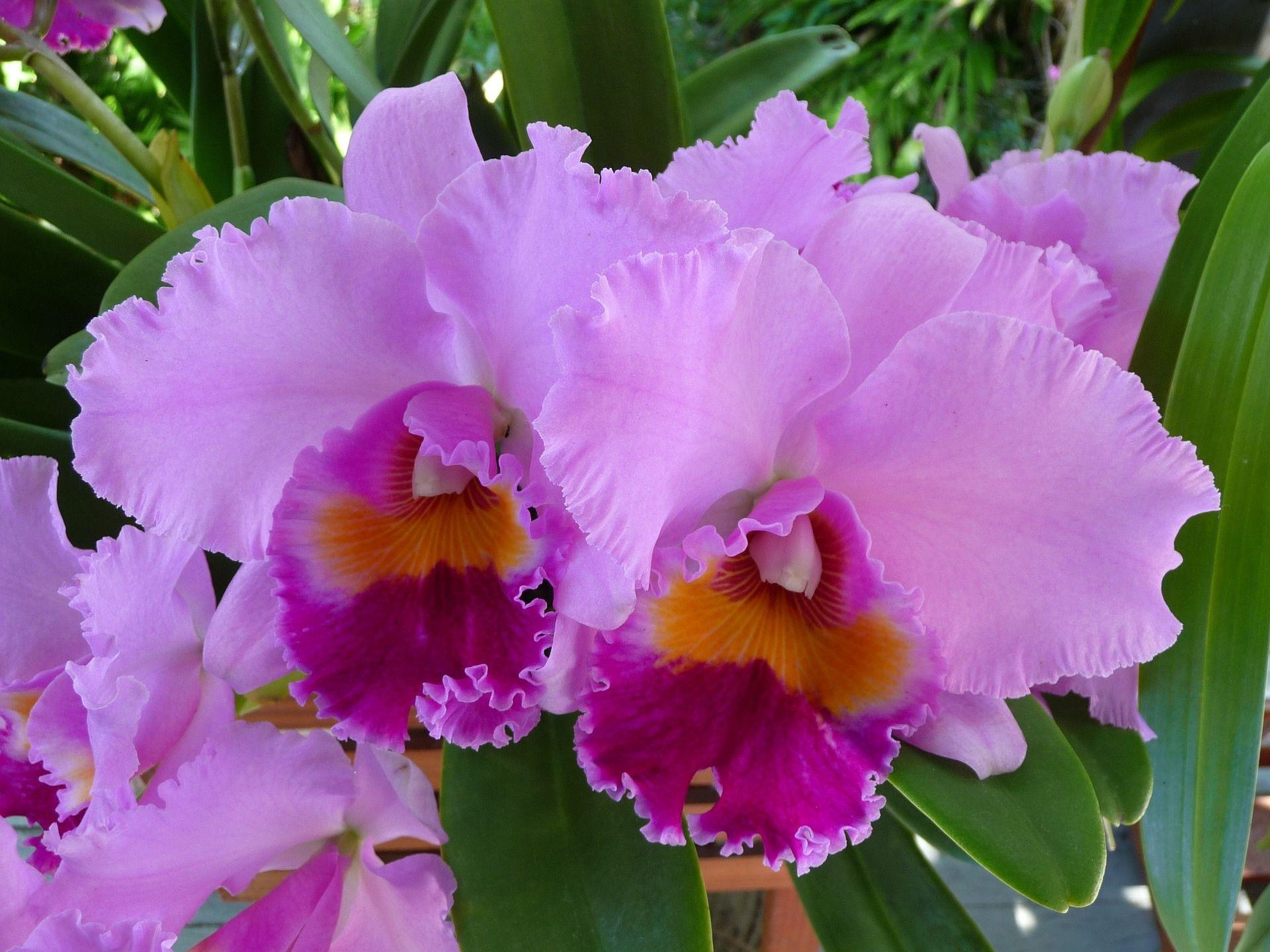 5-soiuri-de-orhidee-usor-de-cultivat-ii