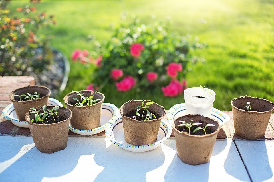rasaduri-de-primavara-in-ce-sa-plantezi-semintele