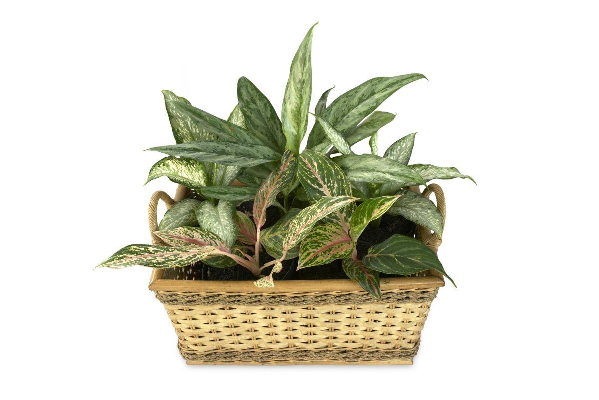 7-plante-care-nu-au-nevoie-de-lumina-multa