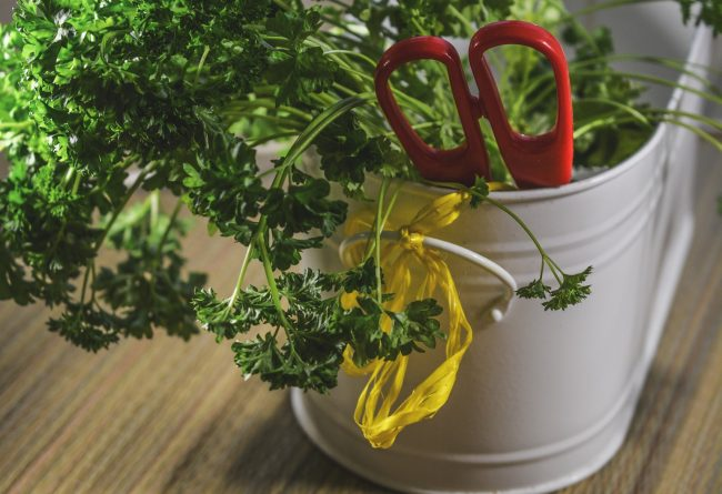 mini-gradina-in-bucatarie-ce-plante-aromatice-trebuie-sa-ai