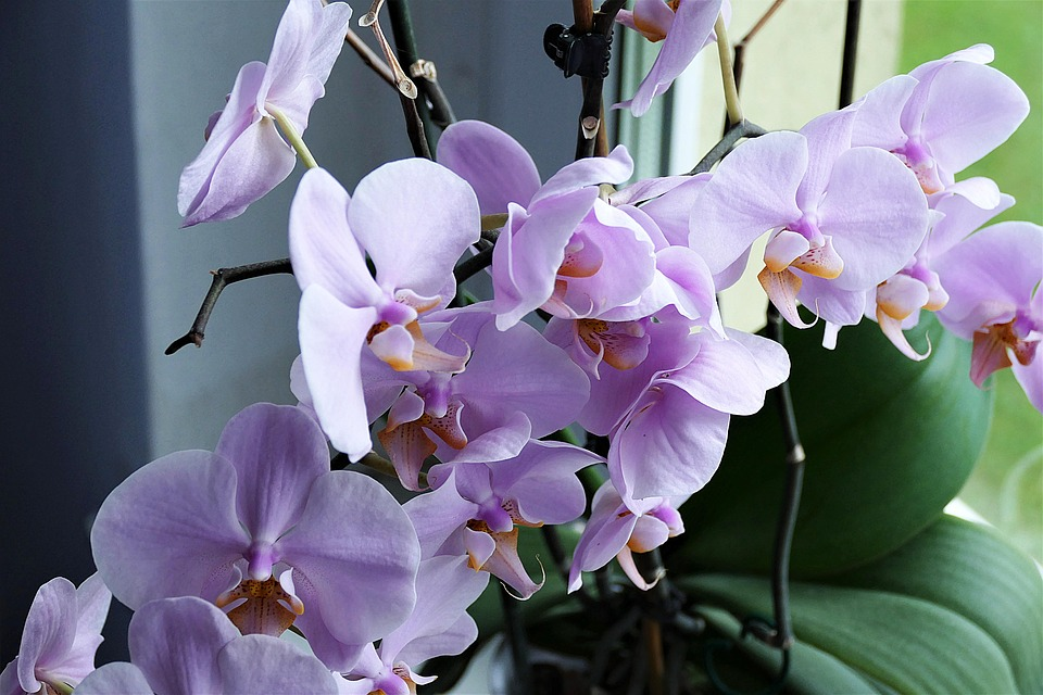 orhideea-cadoul-sofisticat-pentru-ziua-indragostitilor-cum-o-cumperi-de-la-florarie
