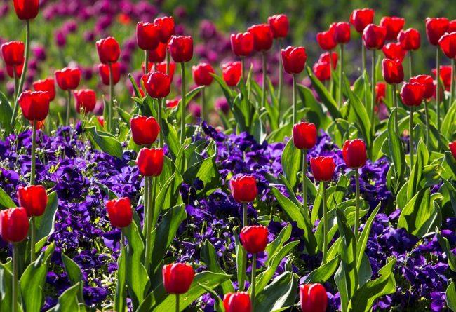 ce-flori-se-planteaza-in-septembrie