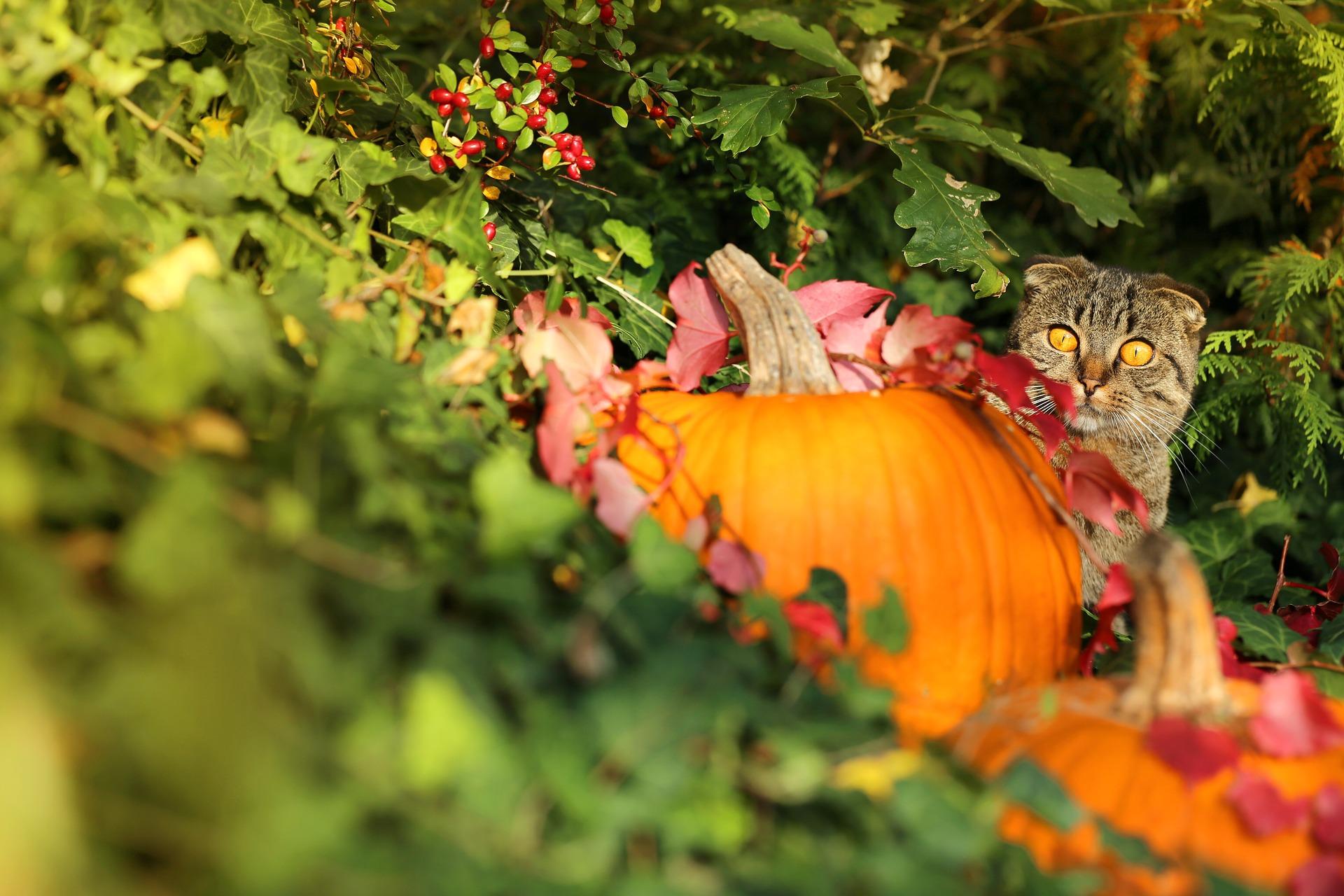 decoratiuni-halloween-usor-de-realizat